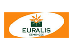 Семена гибридов Кукурузы Байер /Евралис